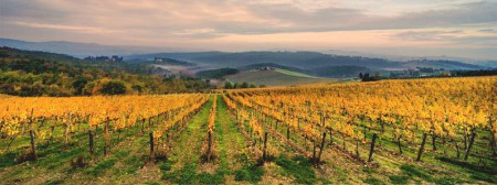 The vineyards of Chiocchio in Chianti, Tuscany