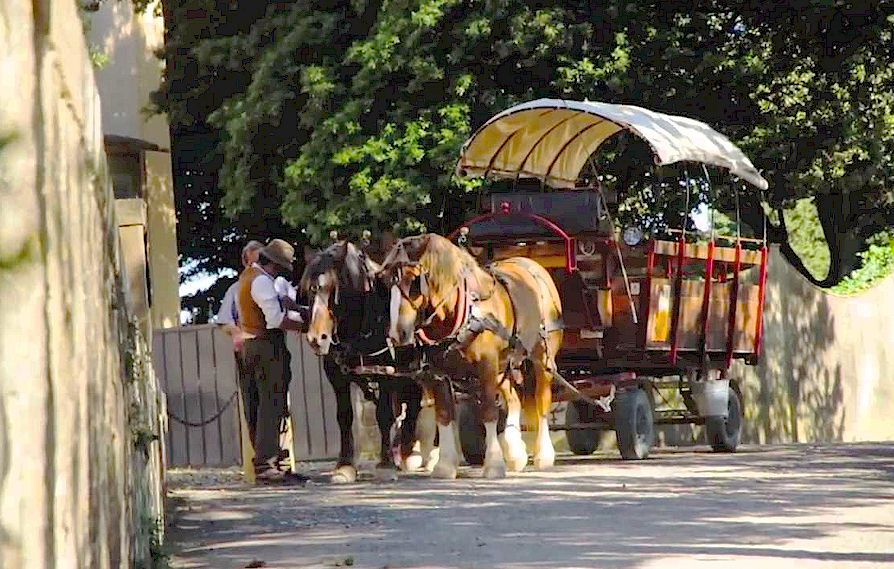 Horse and wagon tours in Tuscany