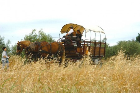 horse and wagon ride in Tuscany